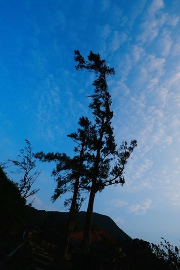 Low angle view of silhouette tree against building against sky