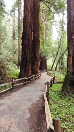 Tree Tree Trunk Forest Tranquil Scene Outdoors Beauty In Nature No People Green Color Redwood Forest