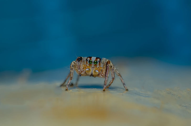 Close-up of spider in the sea