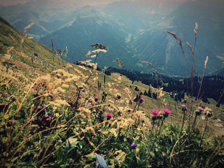 Wiese  Nature Ferien Ferien 2016 Holiday View Aussicht Plants Plants And Flowers Blumenpracht🌺🍃 Sunny Natur Plant Photography Blumen *~* Bergen Mountains Mountain View Braunwald