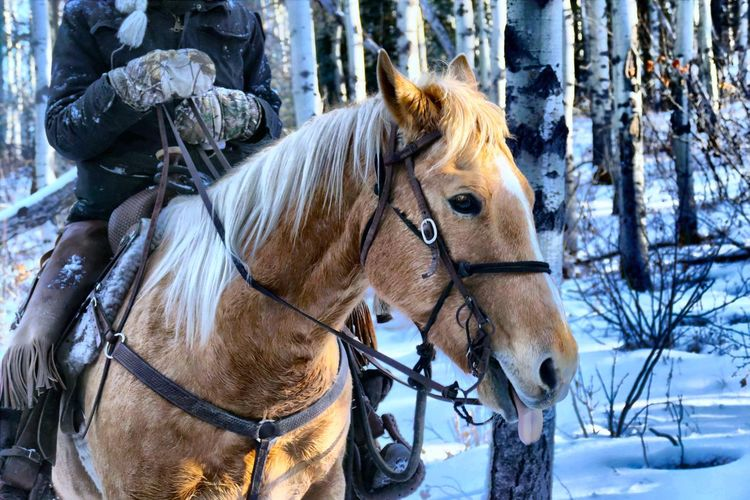 Close-up of horse standing in snow