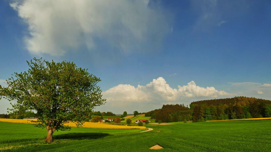Springtime in Bavaria Beauty In Nature Cloud - Sky Day Environment Field Grass Green Color Growth Land Landscape Nature No People Non-urban Scene Outdoors Plant Scenics - Nature Sky Sunlight Tranquil Scene Tranquility Tree Yellow Color