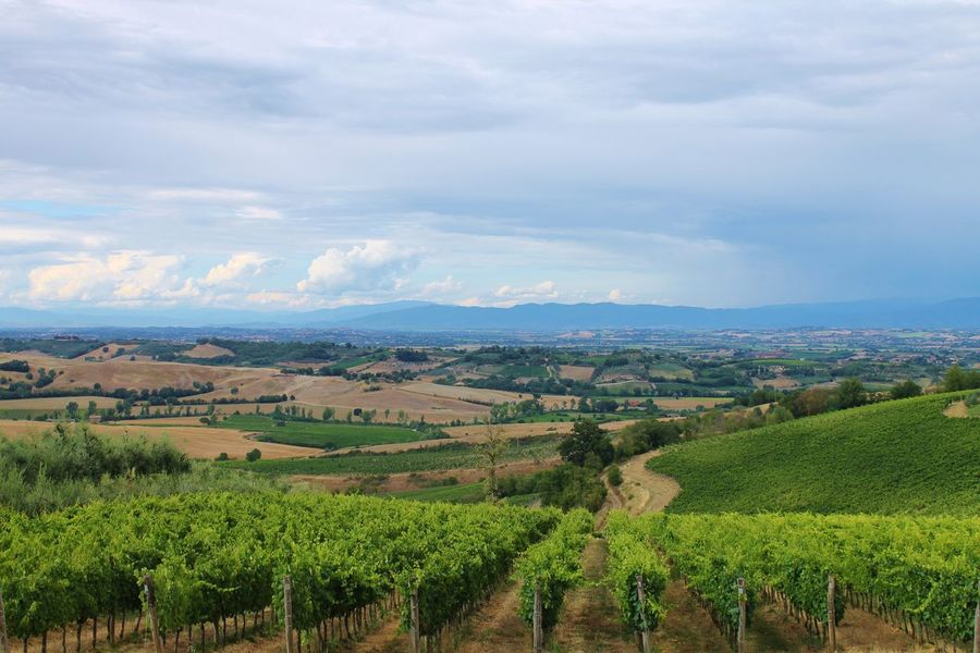Aerial View Agriculture Beauty In Nature Cloud - Sky Field Landscape Scenics Sky Vineyard Wine Moments