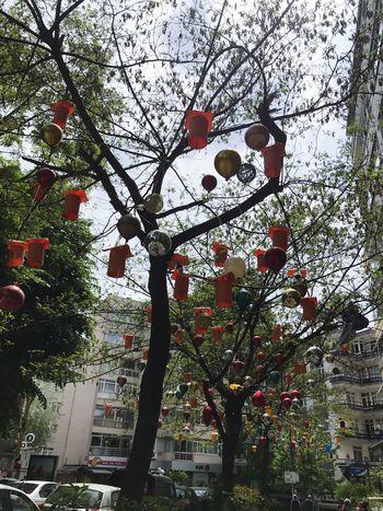 Kadıköy Kadıköymoda Agac Susler Tree Gokyuzu Istanbul
