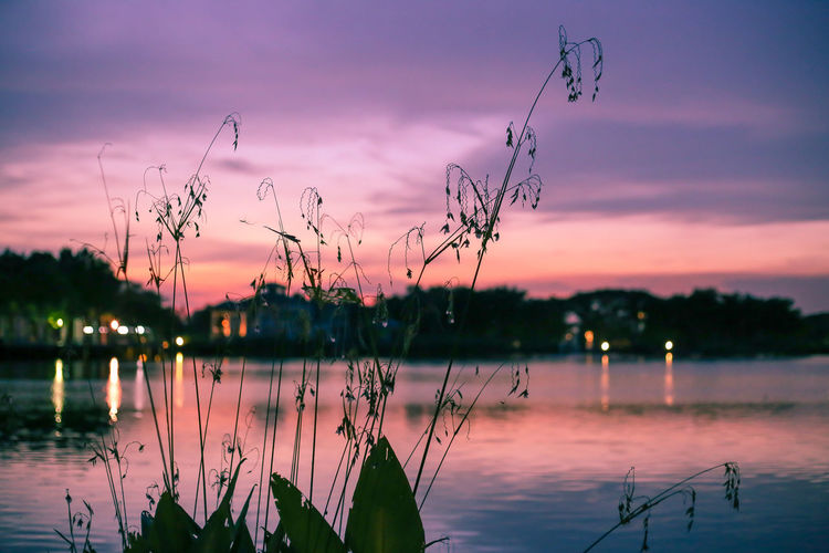 Twilight EyeEm Best Shots EyeEm Nature Lover EyeEmNewHere Thailand Lake Lake View Bangkok Bangkok Thailand. Twilight Twilight Sky Coulds And Sky Sky Sunset Relaxing Color Colors Water Flying Sunset Lake Multi Colored Reflection Tree Reflecting Pool Reflection Lake A New Beginning