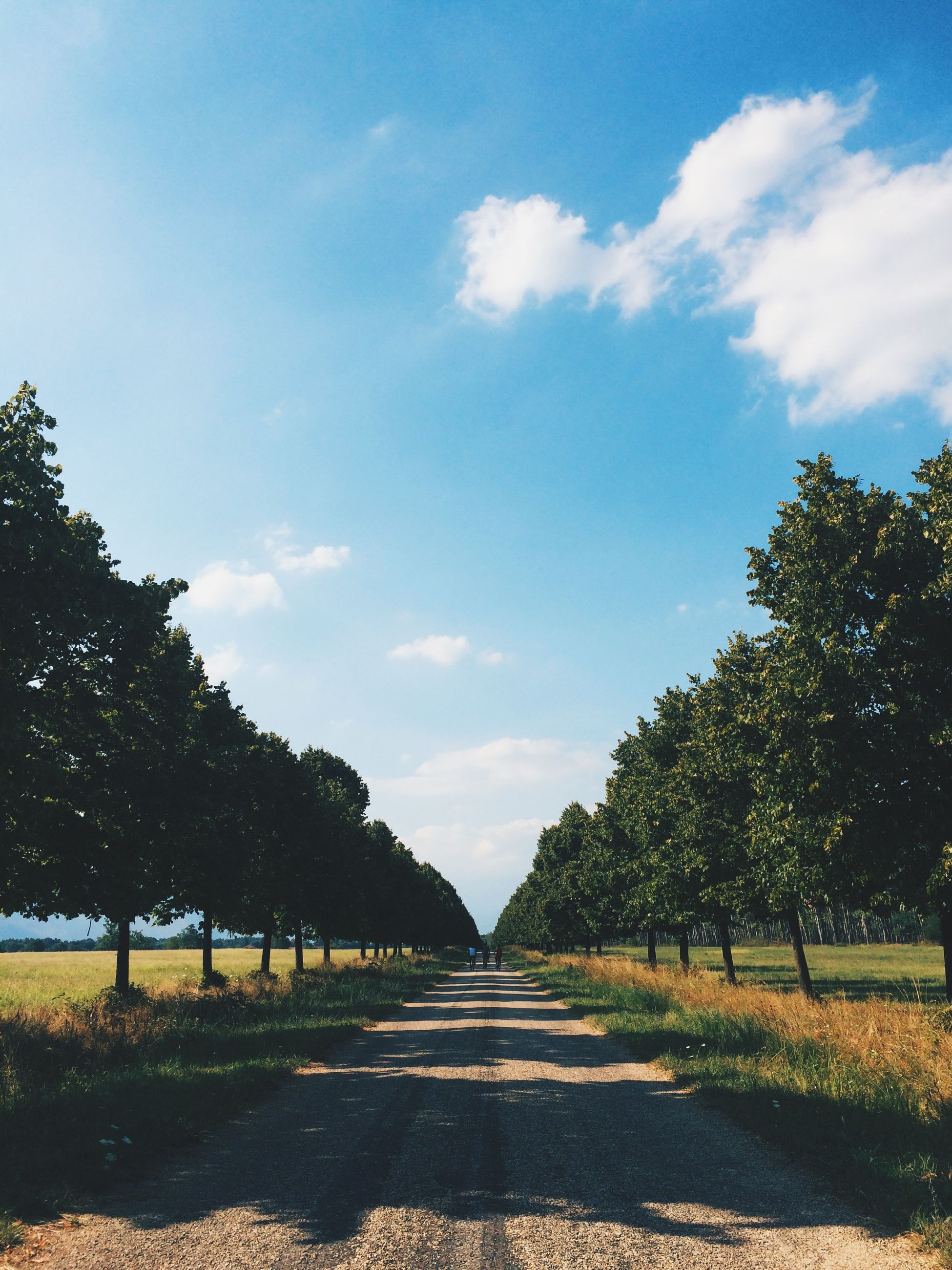 tree, the way forward, sky, tranquility, tranquil scene, diminishing perspective, road, landscape, growth, nature, field, vanishing point, dirt road, grass, sunlight, footpath, beauty in nature, scenics, day, blue