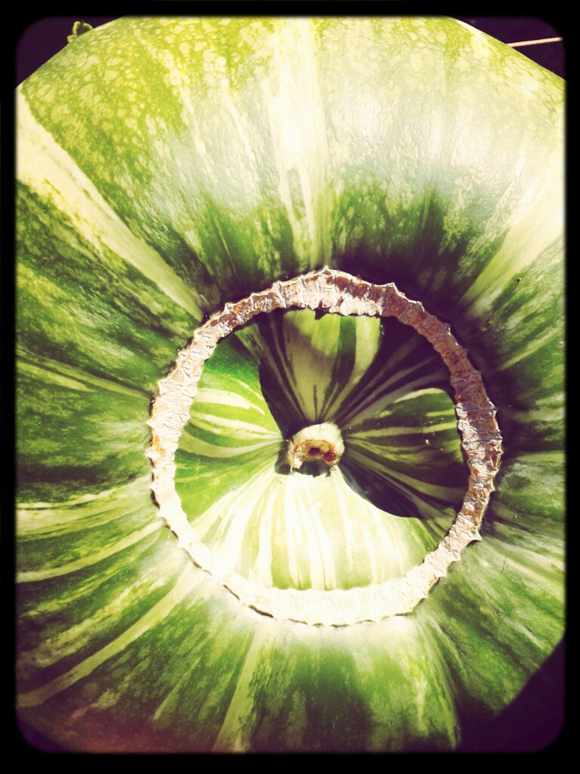 transfer print, auto post production filter, circle, green color, growth, pattern, close-up, high angle view, nature, full frame, no people, freshness, plant, beauty in nature, directly above, textured, day, natural pattern, backgrounds, outdoors
