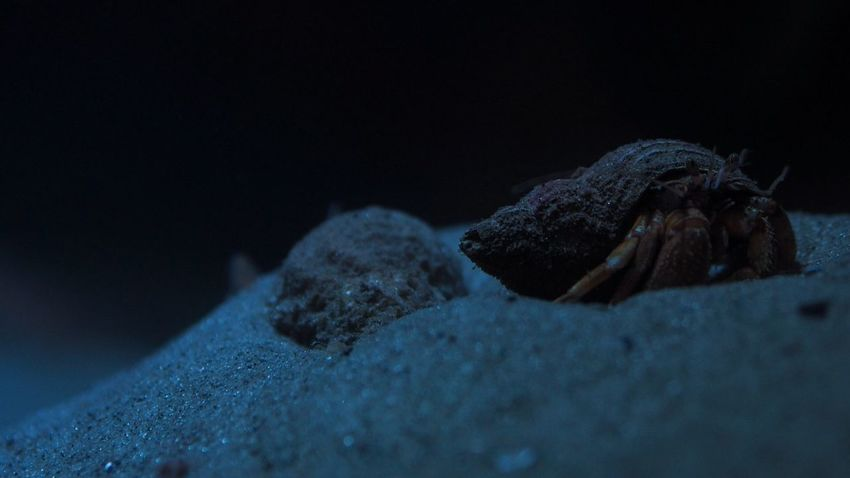 Hermit Crab Crab Sand Shell Olympus OM-D E-M5 Mk.II M.Zuiko 45mm 1:1,8 Nature Sea