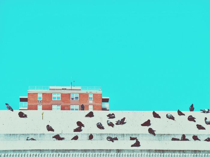 Pigeons On Roof Against Clear Sky