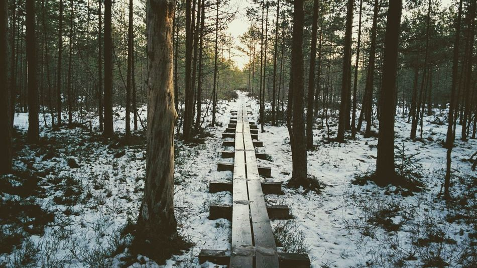 Beauty In Nature Bog Cold Temperature Estonia Estonian Nature Forest Forest Photography Growth Nature No People Outdoors Path Pine Scenics Snow Sun Tree Viru Bog Winter Long Goodbye The Secret Spaces The Great Outdoors - 2017 EyeEm Awards Neighborhood Map Let's Go. Together. Breathing Space Your Ticket To Europe Lost In The Landscape