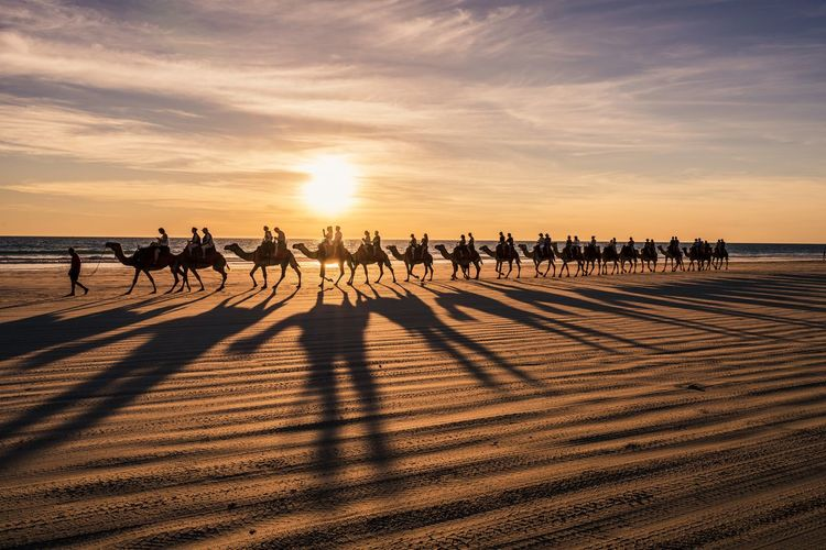 People riding camels at beach during sunset