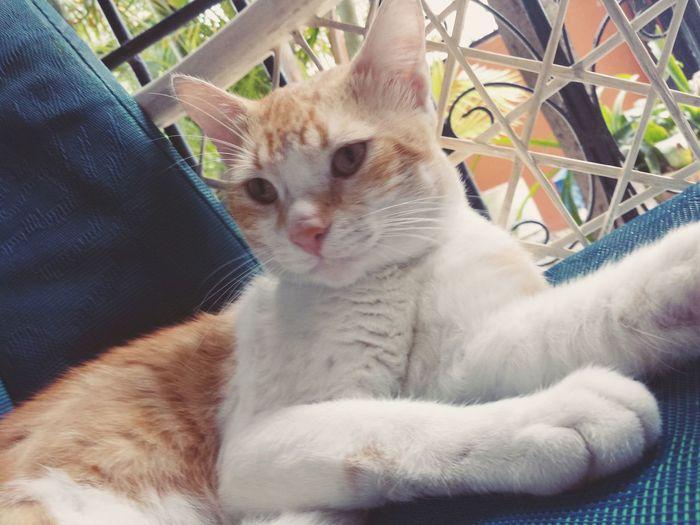 Si quieres triunfar se astuto, cortez, ambicioso y apasionado en lo que haces. Triunfar Cat Felino Rapido Domestic Animals Domestic Cat Love Astucia Day One Animal Gato😽 Natural Naturaleza