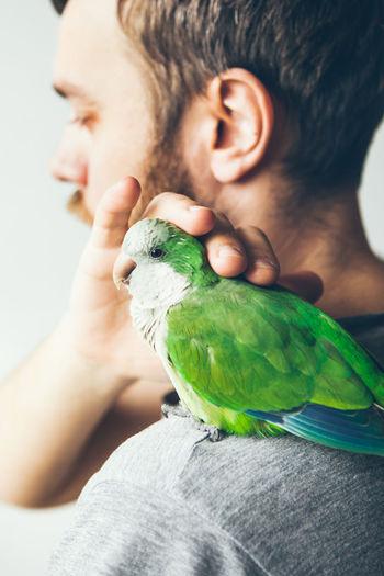 Close-up of man holding bird