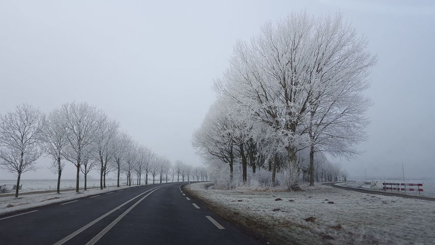 Transportation Tree Sky Road No People Growth Outdoors Day Nature Snowing Whitefrost Nature Beauty In Nature Transportation Commuting Road Snow ❄ Travel Snowy Snow Adapted To The City Shades Of Winter