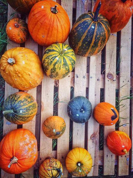 Gourds Pumpkins Fall Colors Autumn🍁🍁🍁