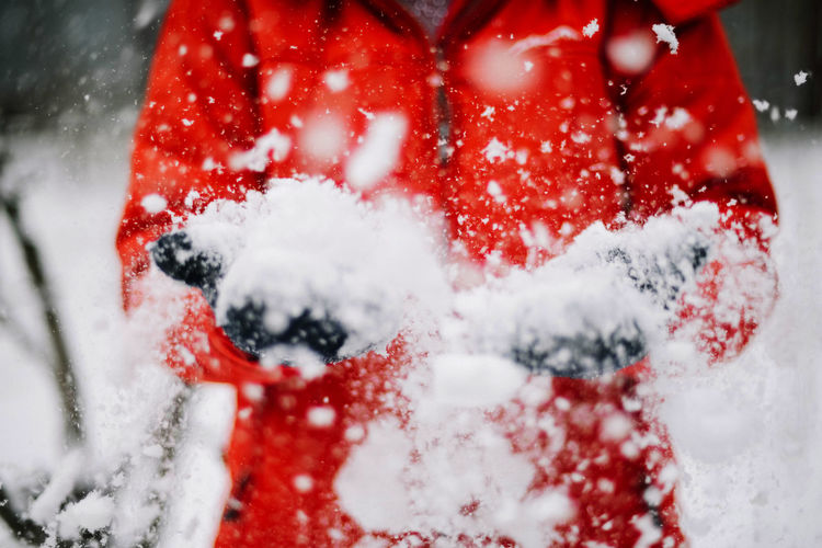 Close-up of snow covered berries
