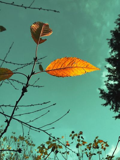 Low Angle View Autumn Leaf Tree Sky Nature Beauty In Nature Outdoors Day Branch No People Growth