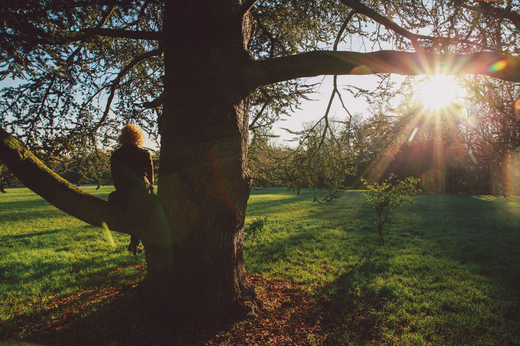 Branches Field Grass Grassy Growth The Following Lens Flare Lifestyles London Nature Nonsuch Nonsuch Park Park - Man Made Space Rays Shadow Sun Sunbeam Sunlight Sunny Sunset Tree Tree Trunk Winter Original Experiences People And Places EyeEm LOST IN London Postcode Postcards