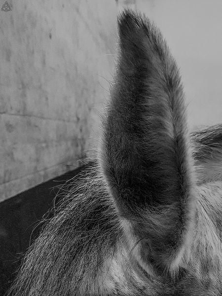 Q tips... EyeEm Market © From My Point Of View Lausanne, Switzerland EyeEm Best Edits EyeEm Masterclass EyeEm Best Shots Eyem Collection EyeEm Gallery Eyem Best Shots Eyemphotography Backgrounds Eyembestpics Eyeemphoto Tranquility No People Day Horses Horse Love Horselove Beauty Horse Photography  Horse Cheval Blanc Chevalblanc Break The Mold