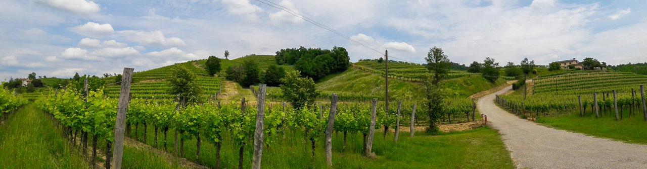 Hills Wine Tasting Wineyards Friuli Venezia Giulia Italy Collio Green Color Large Format