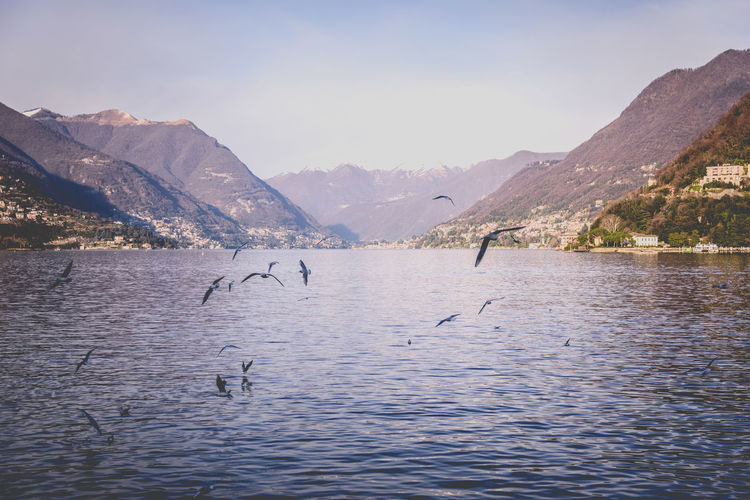 I wanna fly Animals In The Wild Bird Como Day Fly Free Goodmorning I Landscape Mountain Nature No People Outdoors Seagull Tranquil Scene Travel Water Wild First Eyeem Photo First Eyem Photo