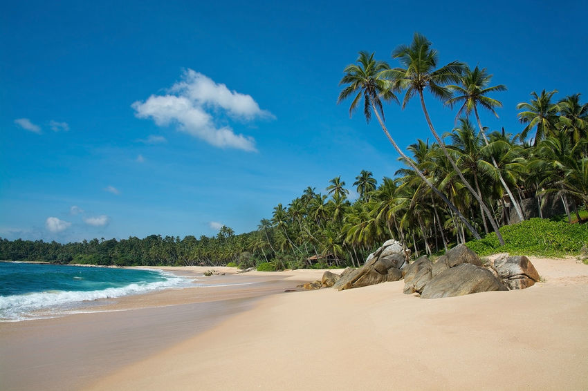 Paradise beach with green turquoise waves, coconut palm trees and fine untouched sand, Southern Province, Sri Lanka, Asia. Coconut Palms Green Pristine Sri Lanka Sunny Beach Beauty In Nature Blue Cloud - Sky Day Growth Landscape Mammal Nature No People Outdoors Palm Tree Paradise Sand Sandy Scenics Sea Sky Tranquil Scene Tranquility Tree Tropical Turquoise Water Waves