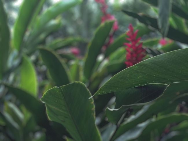 Beauty in nature Nature_collection Depth Of Field Leaf Green Color Growth Plant Nature Close-up Day No People Beauty In Nature Outdoors Freshness Fragility
