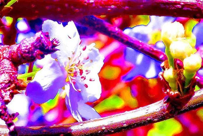 stamens & colors =) 1) Macroclique 2) Ig_affair_weekly 3) Ig_closeups 4) Small_world_upclose 5) 5star_images 6) Macro_vision 7) Sn_mar4 8) Myworld_in_red 9) Tv_depthoffield 0) Edit_mania__ 1) Tgif_nature 2) Pocket_family 3) Igglobalclubmacro 4) Macro_captures 5) Fotofanatics_macro_ 6) Editz4fun 7) Macroworld_tr 8) 9vaga_macro 9) Flair_macro 0) Igbest_macros 1) Ptk_macro 2) Naturehippys 3) Macro_secrets 4) Tv_colors 5) Macro_holic 6) ig_azhubs 7) macro_brilliance 8) best_macro 9) show_us_macro 0) global_nature_macro