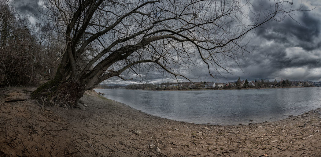 Dramatic Sky Rheinufer Strand Bare Tree Beauty In Nature Branch Clouds And Sky Day Nature No People Outdoors Panno Rheinfelden Scenics See Sky Tree Wasser Water