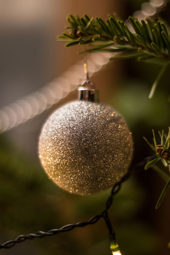 Decorated Christmas tree with Christmas tree ball and candlelight Christmas Decoration Close-up Decoration Hanging Christmas Christmas Ornament Plant Focus On Foreground Holiday No People Tree Celebration Nature christmas tree Green Color Sphere Food Fruit Illuminated Food And Drink Outdoors