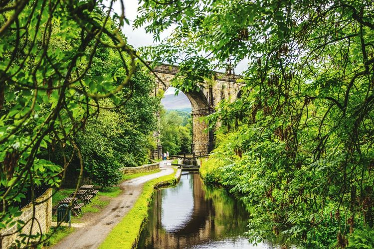Tree Growth Water Nature Outdoors Beauty In Nature Scenics Vıllage Saddleworth Moor Saddleworth Springtime Bridge - Man Made Structure Uppermill Canal