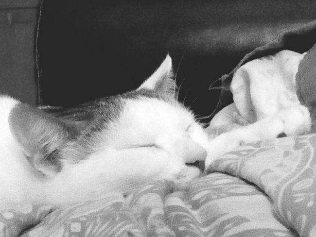 Relaxing Cat Lovers