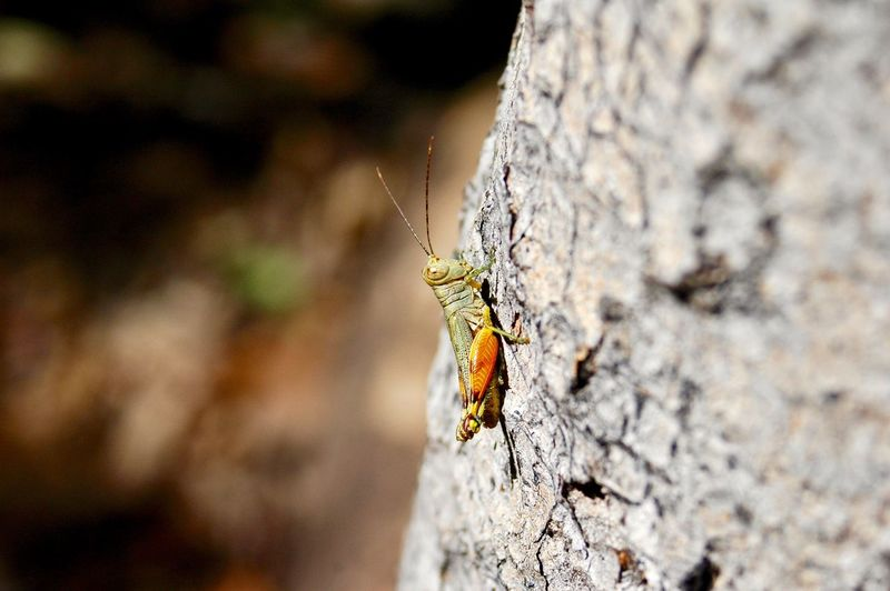 Leichhardt Grasshopper On Tree Animal Photography Kakadu National Park Outback Australia Colourful Colorful Petasida Ephippigera Leichhardt Insect Grasshopper Animal Themes Animals In The Wild Animal Animal Wildlife One Animal Invertebrate Insect No People Nature Close-up Focus On Foreground Selective Focus