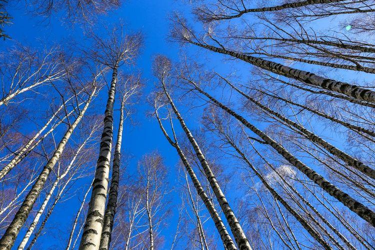 Wood Trees Tree