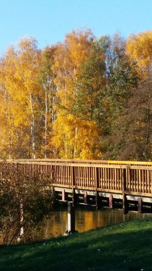 Autumn Water Tree Bridge - Man Made Structure River Sky Architecture