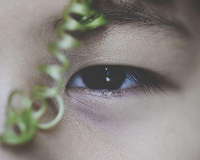 Close-up of tendril near human eye