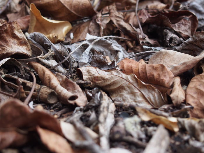Leaf Selective Focus Season  Leaves Dry Autumn Nature Brown Day Scenics Fragility Group Of Objects Outdoors Full Frame No People Photography Nature Autumn Natural Pattern Abundance Season