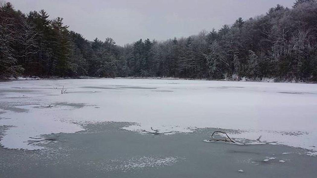 Ice Frozenlake Snow Forest Winter