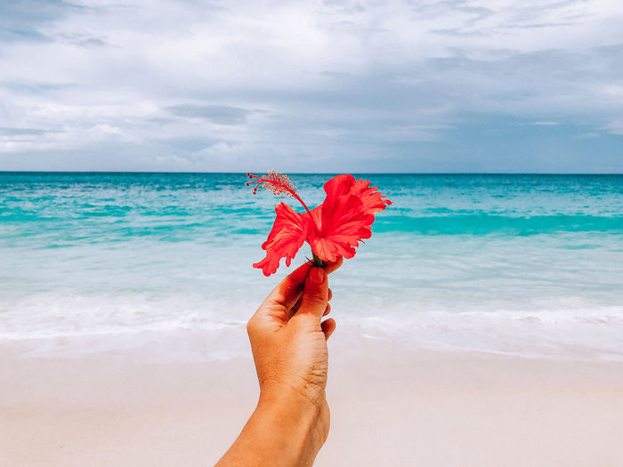 Cropped hand of person holding hibiscus flower at beach against sky