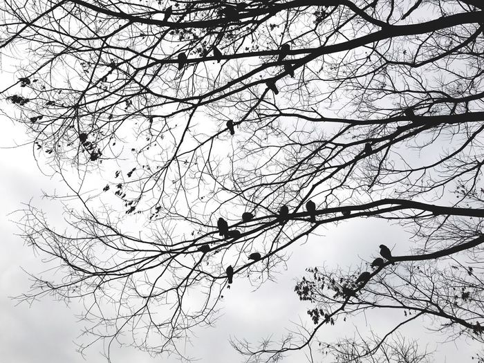 Tree Low Angle View Branch Nature Sky Bird