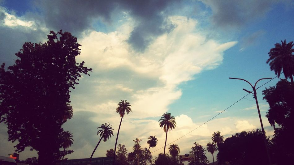 Lovely morning at Mount Abu. Mount Abu Rajasthan, India Morning Sky Holiday Trip Photo Palm Tree Beauty In Nature