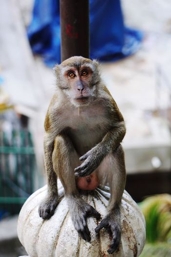 Monkey sitting on the steps up to batu caves