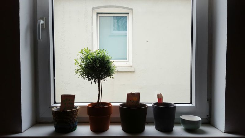 Plant Growth No People Day Indoors  Nature Cactus Urban Gardening Garden Flat