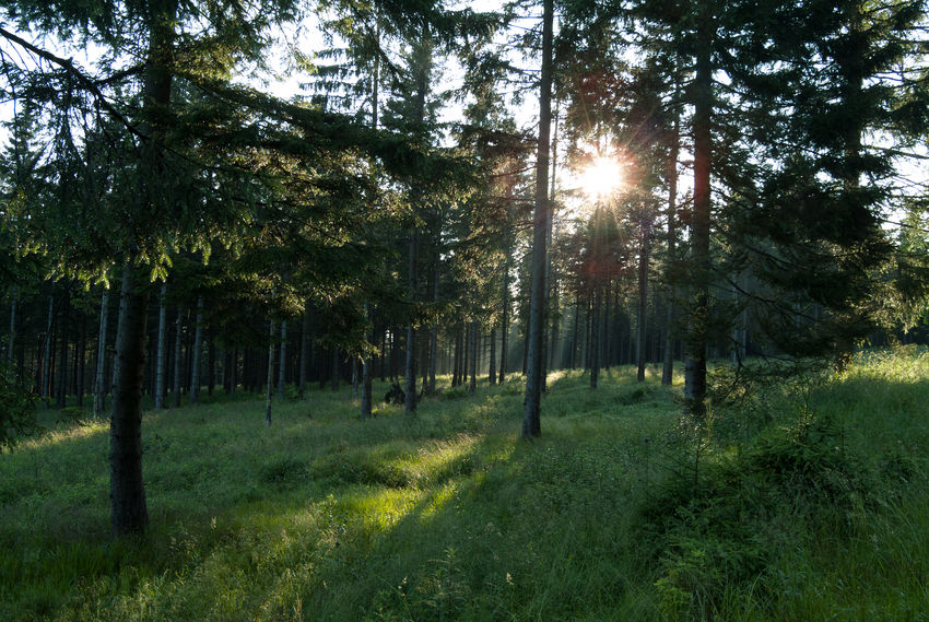 Harz, Germany Beauty In Nature Day Forest Grass Growth Landscape Moody Lights Nature No People Outdoors Scenics Sky Sun Sunbeam Sunlight Tranquil Scene Tranquility Tree