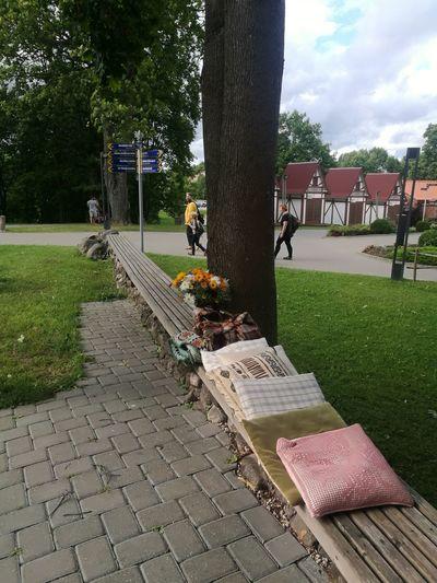 Tree Day Outdoors At Valmiera, Latvia