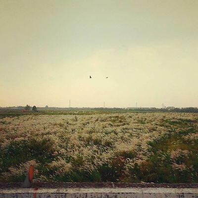 秋季裡自在的翔鳥。Autumn Flyingbird Riverside Silvergrass 秋 愛曼達