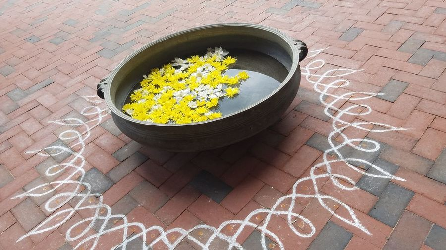 High angle view of yellow flowers in container on footpath
