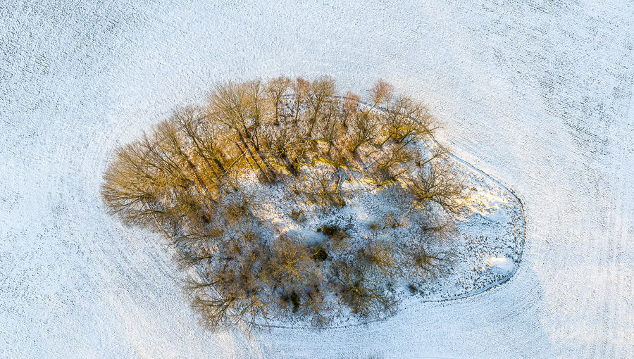 Winter is exotic and with a bit of light from a setting sun, warm colors add to the cold. Cold Temperature Winter Snow No People Nature Plant Tree Directly Above Close-up Outdoors Growth White Color Land Frozen Day Studio Shot Beauty In Nature High Angle View Coniferous Tree Drone Photography Winter