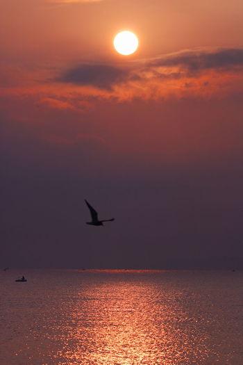 Apulia Italy Italia Puglia Romantic Giovinazzo Horizon Over Water Nicola Ranieri Sea Seagull Sun Sunrise Sunset Tranquil Scene Vassel