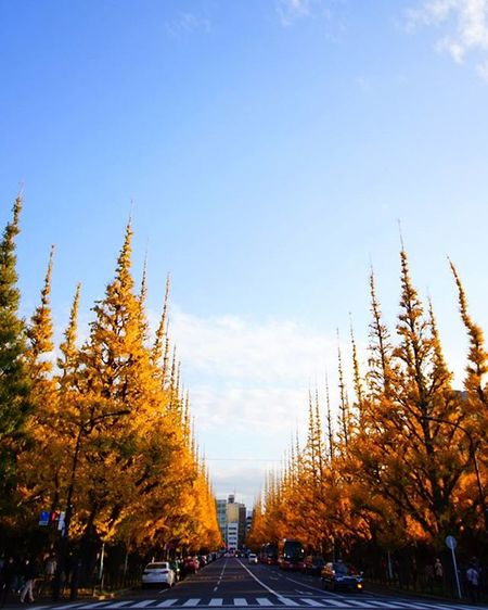昨日の神宮外苑イチョウ並木。もう葉は落ちてスカスカでしたが、たくさんの人が見にこられてました。もう少し早く行けば良かったな! Leaves Ginko Yellow Trees Street Japan_focus いちょう並木 神宮外苑いちょう並木 写真撮ってる人と繋がりたい 写真好きな人と繋がりたい 広角レンズ